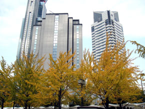 2012-11-9p.jpg