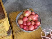 トマト山盛り
