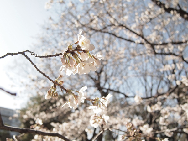nyugakusiki-1a_20130413143818.jpg
