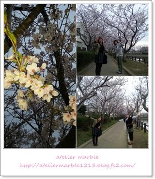 アトリエマーブル 旭 袋公園 桜まつり