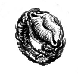 黒い唇の指輪