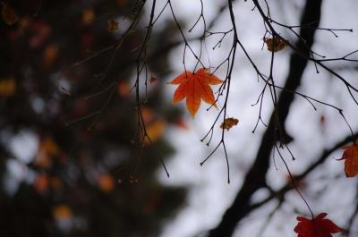 銀杏並木7