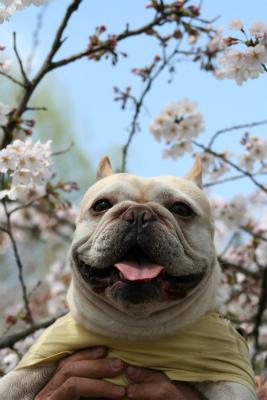 2012.4.6 大宮公園 (桜) 013