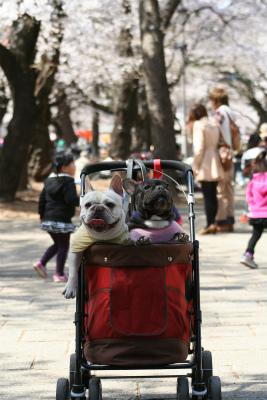 2012.4.6 大宮公園 (桜) 029