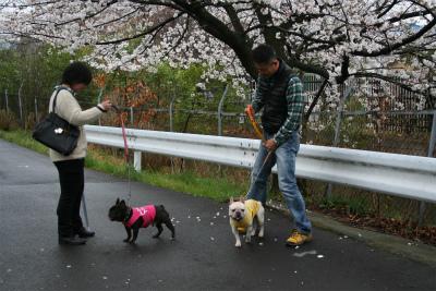 2013.3.25 大宮公園花見 001