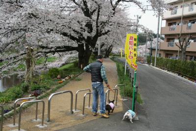 2013.4.1 kasumigawa 001
