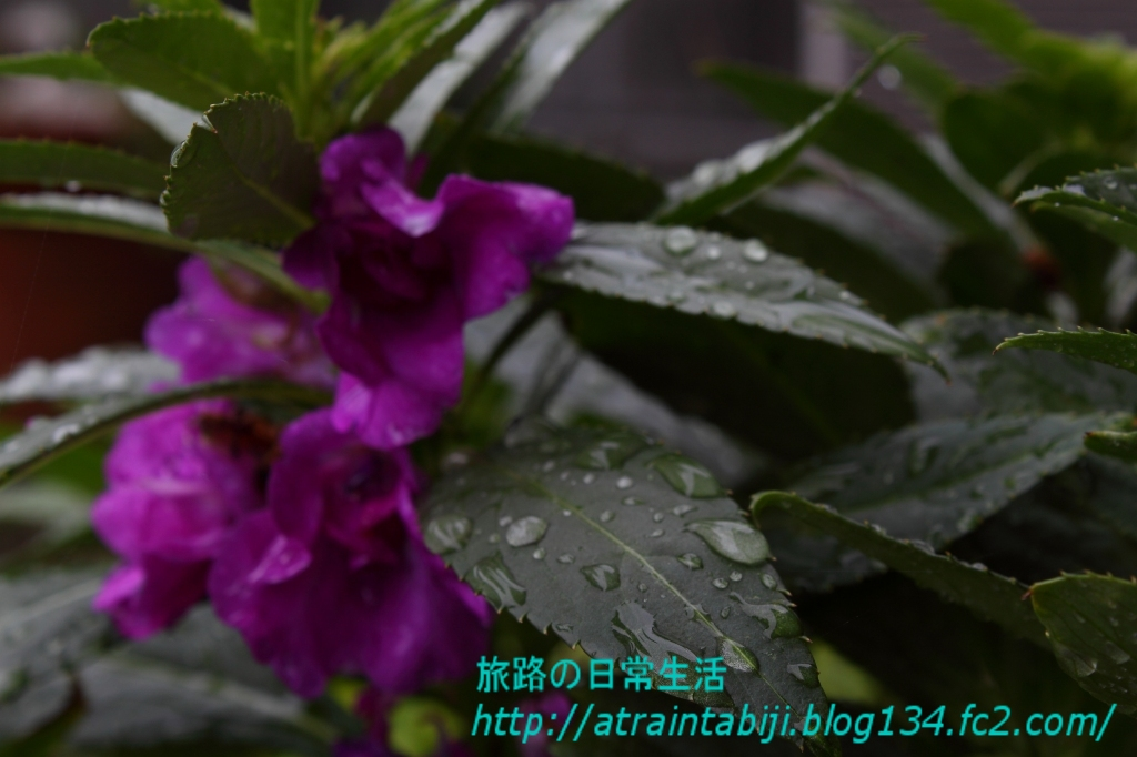 s-IMG_9313.jpg