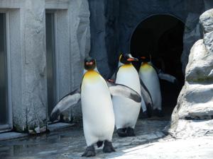 社内旅行_ペンギン
