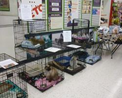 adoption event 2