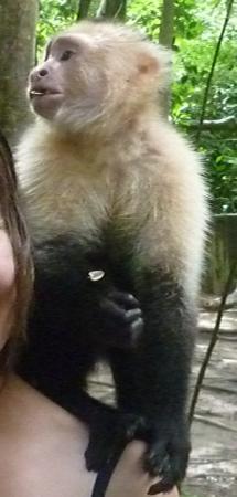 monkey small