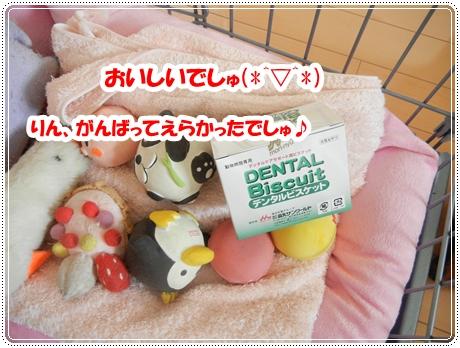 DSCN0988_20120927134453.jpg