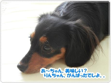DSCN0989_20120927132716.jpg