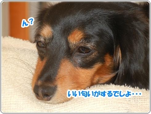 DSCN1067.jpg