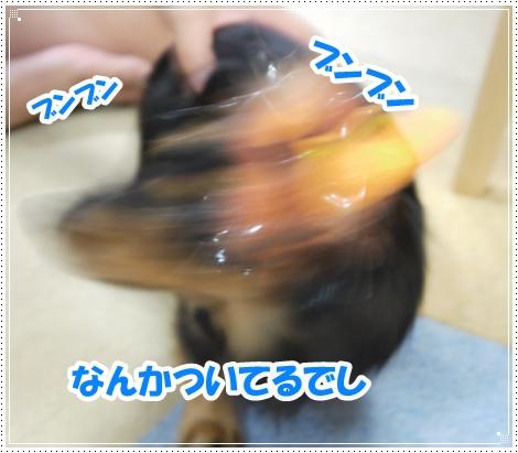 P1030285.jpg