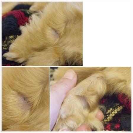 cats_20120609231541.jpg