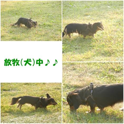 cats_20121021232402.jpg