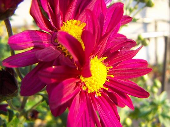 お日様に照らされたお花