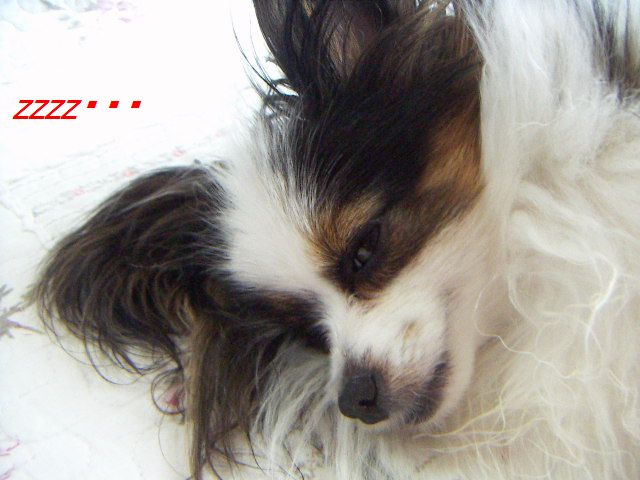 PICT0011_20120616094434.jpg