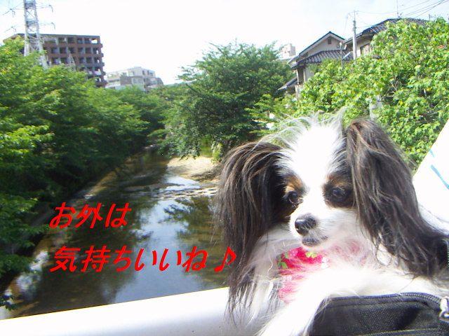 PICT0015_20120609175938.jpg