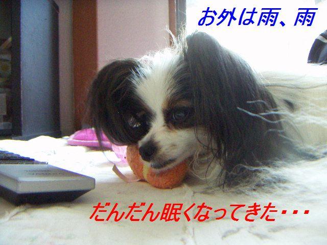 PICT0015_20120616093803.jpg