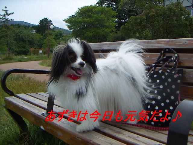 PICT0032_20120617190144.jpg