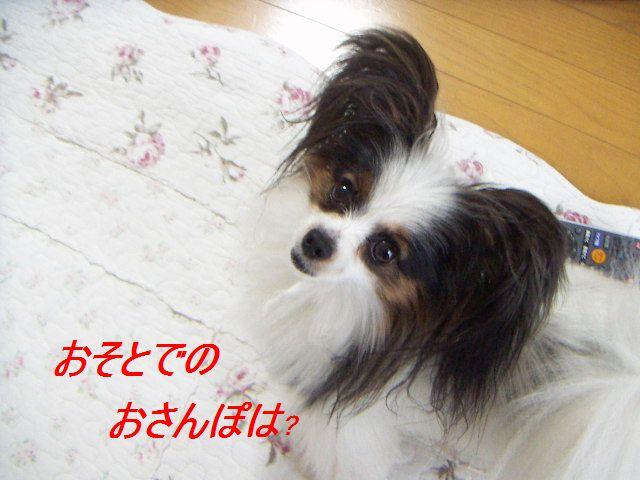 PICT0040_20120609175830.jpg