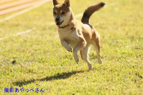 DSC_3260+AZUKI.jpg