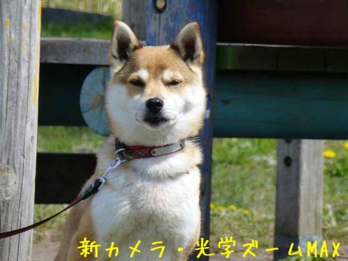 P1000010-azuki.jpg