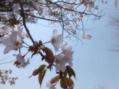 P1000190-azuki.jpg