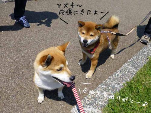 P1000604+AZUKI.jpg