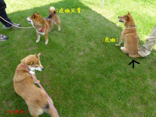 P1000642+AZUKI.jpg