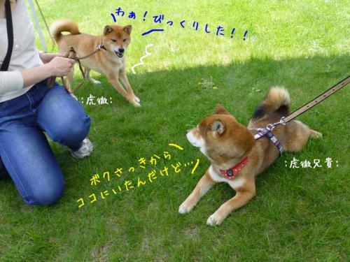P1000651+AZUKI.jpg