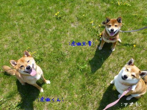 P1000817+AZUKI.jpg