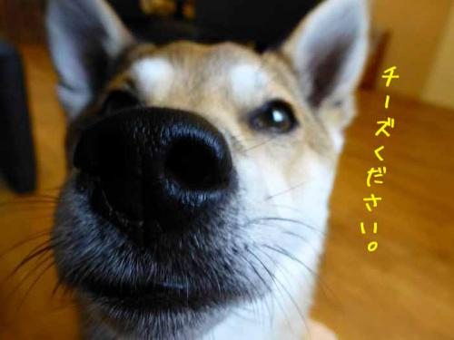 P1010215+AZUKI.jpg