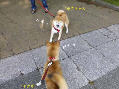 P1010400+AZUKI.jpg