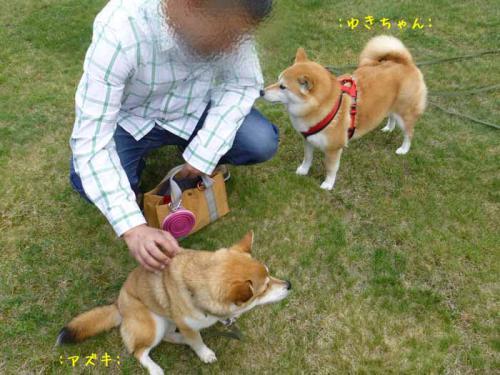 P1010450+AZUKI.jpg