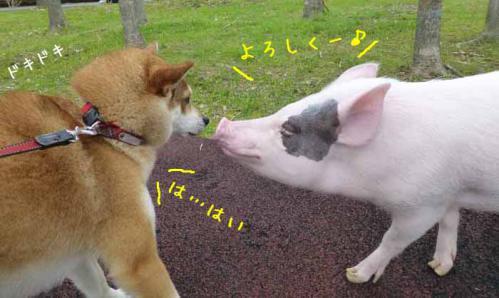 P1010624+AZUKI.jpg