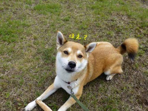P1010706+AZUKI.jpg