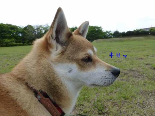 P1010721+AZUKI.jpg