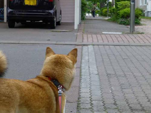 P1010856+AZUKI.jpg