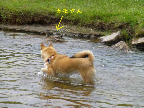 P1020184+AZUKI.jpg