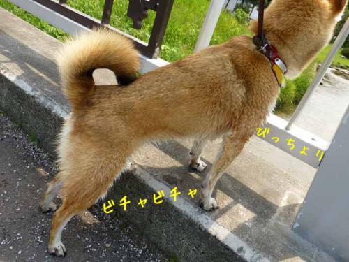 P1020195+AZUKI.jpg