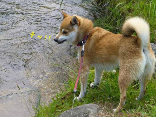 P1020197+AZUKII.jpg