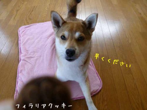 P1020228+AZUKI.jpg