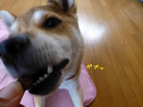 P1020229+AZUKI.jpg