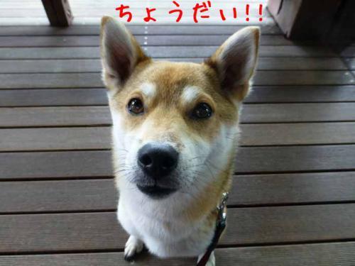 P1020468+AZUKI.jpg