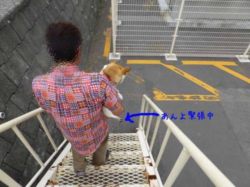 P1030313+AZUKI.jpg
