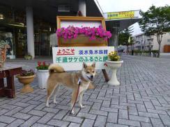 P1030501+AZUKI.jpg