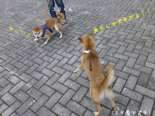 P1030582+AZUKI.jpg