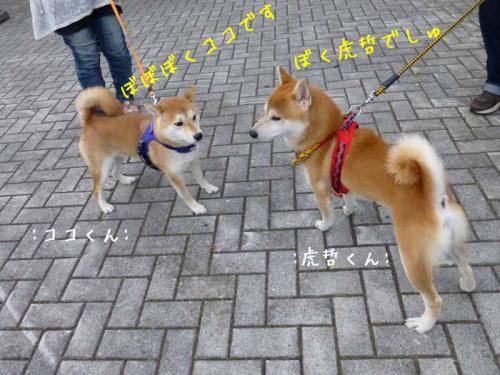 P1030584+AZUKI.jpg